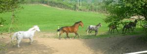 Horses at Bittles Brook Farm